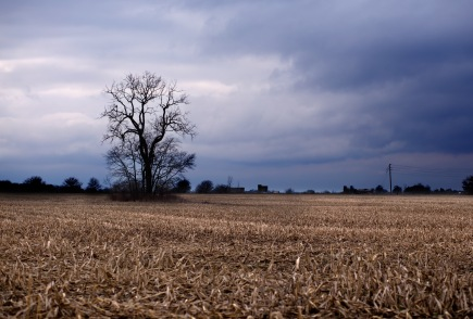 366-day-16-tree-in-field